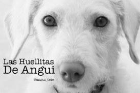 Perros perdidos en Morelia // By @angui_tete