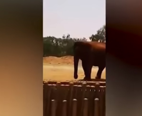 Elefanta Mata A Niña Al Arrojarle Una Roca En Zoológico