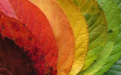 Célébrer Mabon, l'arrivée de l'automne, en italien !