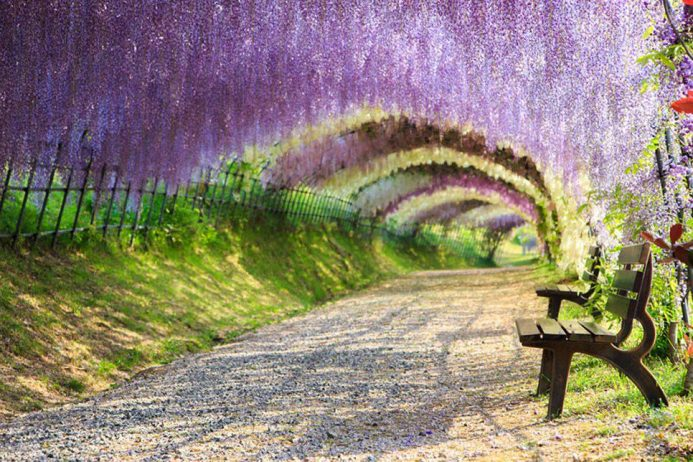 The World 39 S Most Beautiful Tree Tunnels Revealed