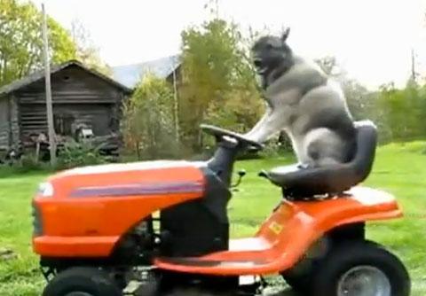 dog-mowing-lawn.jpg