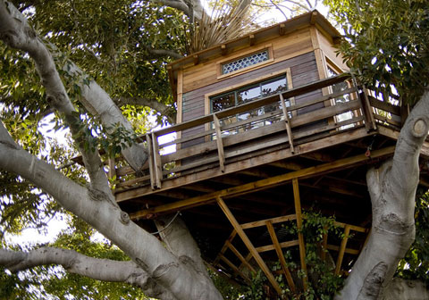 tree-house-design.jpg