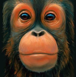 Baby Orangutan Face