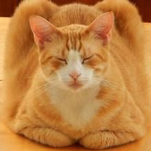 Oscar, also my yoga teacher.