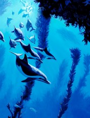 Dolphin School