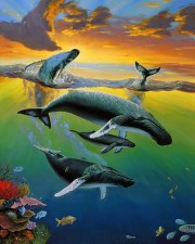 Humpback Whale Family Gathering