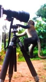 Curious Bystander in Ghana
