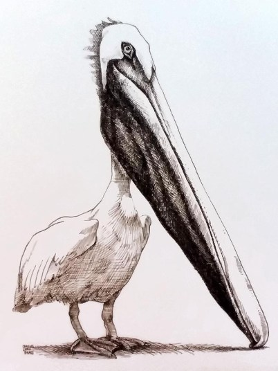 The Really Endangered Species List, Pelican