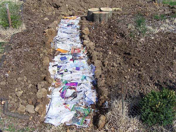 Paper and cardboard to be mulched over for paths