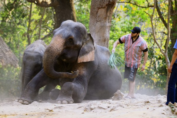 Cleaning the elephants