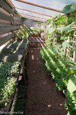 Rick Bayless | Micro-greens & Mint