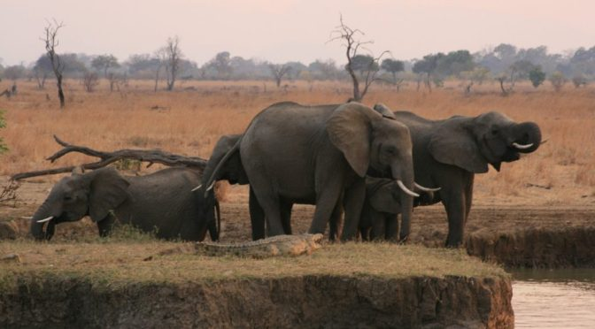 Elephants at Mikumi National Park, Tanzania