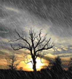 albero_pioggia
