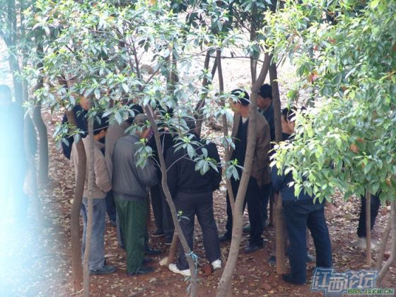 chinese-elderly-in-woods-doing-naughty-things-nanchang-07