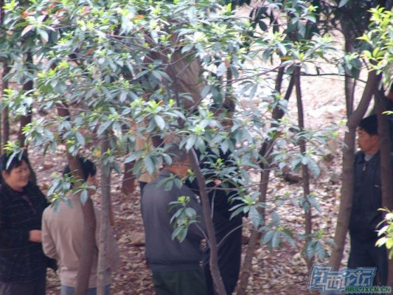 chinese-elderly-in-woods-doing-naughty-things-nanchang-09
