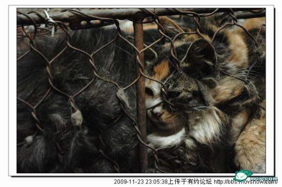 cats-cages-tianjin-china-07