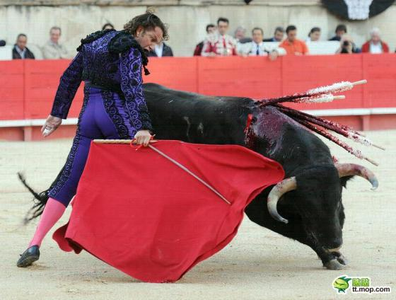 Spanish matador and bull during bullfight.