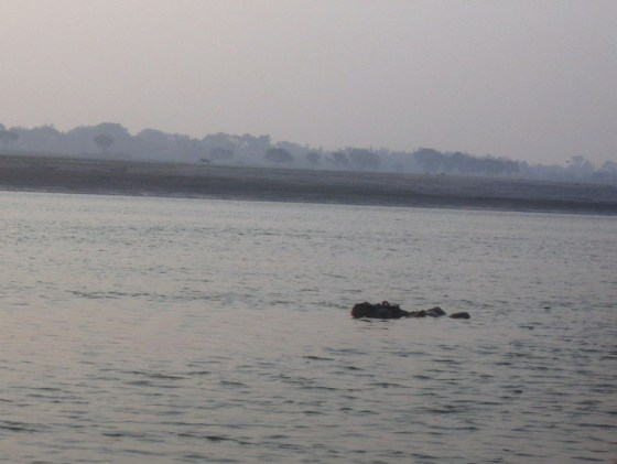 A floating corpse in the Ganges River.