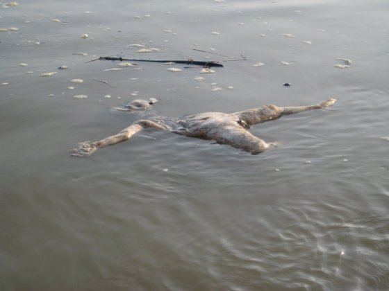 A rotting corpse in the Ganges River.