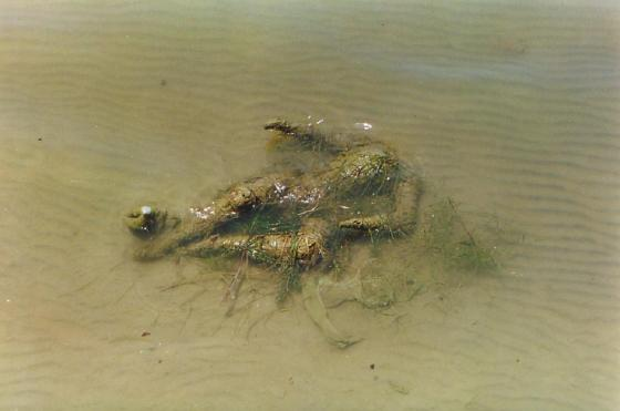 A rotten corpse in the Ganges River.