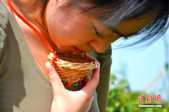 In China, a tea leaf picker places tender tea leaves she plucked with her mouth into a willow funnel held between her breasts.