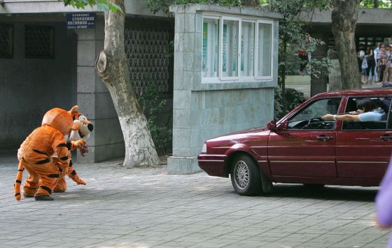 "Chinese zoo workers at the Chengdu zoo shoot an escaped ""tiger"" from their car during an emergency response drill."