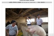 huili-floating-chinese-government-officials-photoshops-13-pigs
