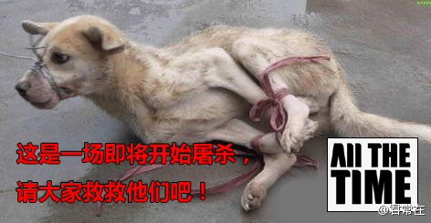 A dog tied up waiting to be slaughtered and butchered in China.