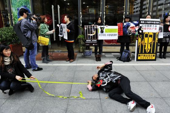 A young Chinese animal rights activist acts out live bear bile extraction on the sidewalk in front of a Guizhentang store in Shenzhen.