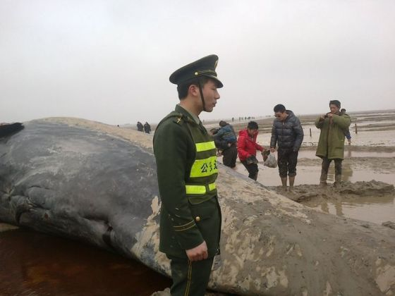 A soldier stands guard by the body of a beached whale in Jiangsu, China.