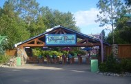 Will Blizzard Beach be getting a new water attraction?
