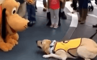 Pluto makes a friend for life at Disneyland