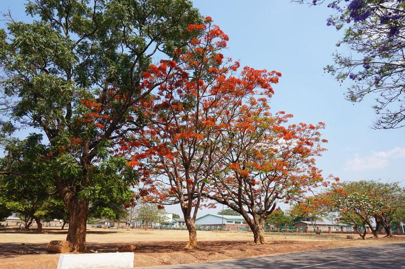 ibenga-trees-1