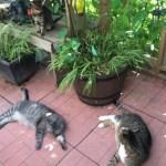 Cats sleeping in catio