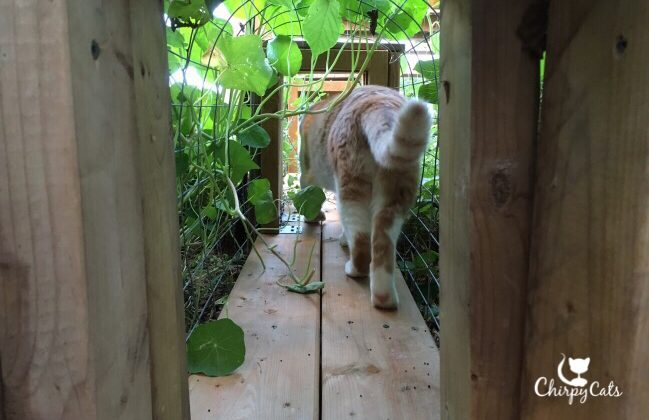 Cat in the tunnel