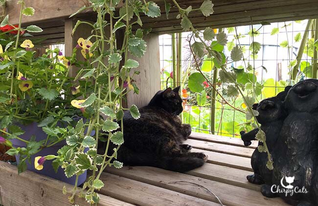 pensive tortie cat sits next to statues