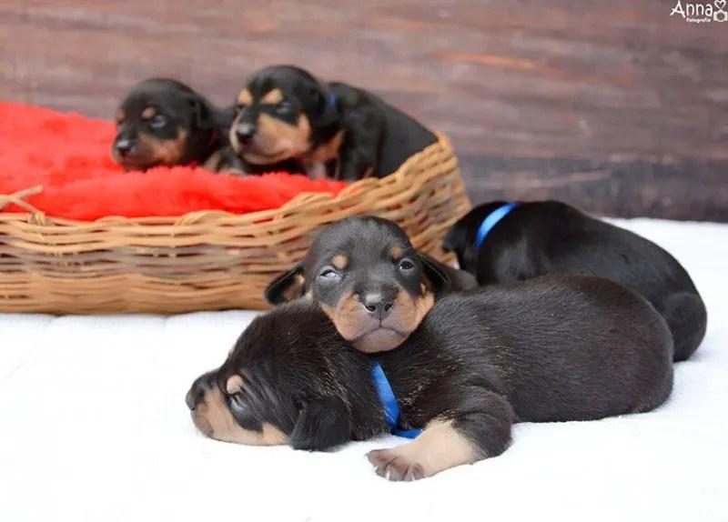 Шест позиции за сън разкриват личността на вашето куче