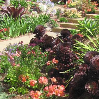 Lush and Waterwise Landscape Design in Carlsbad, CA