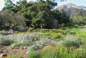 Getting Back To Nature – Xeriscape Landscaping With California Natives