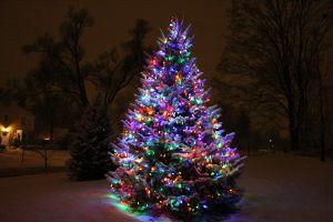 snowtree1_s.jpeg