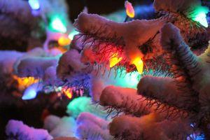 snowtree3_s.jpeg
