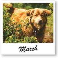 Winnipeg Humane Society - March 2008
