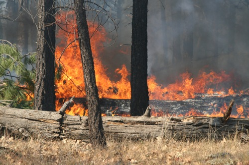 Controlled Burn Fire