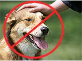 Dog Petting