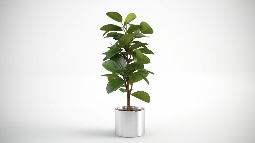 vp-plant-0004
