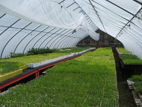 Medium Of Farmers Seed And Nursery