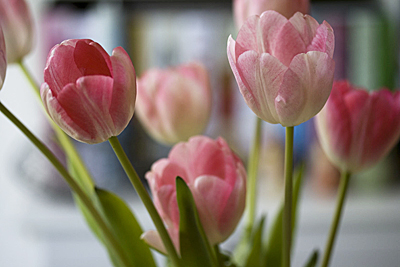 roux-tulipasrosas_1S.jpg