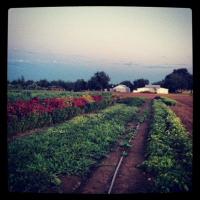 the farm school