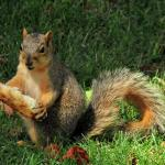 squirrel-eating-pizza-david-arment