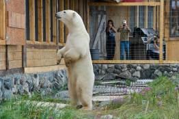 PolarBears-3-Birds&Belugas